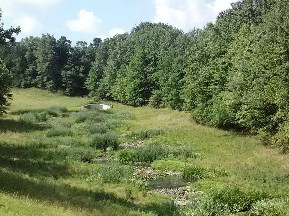 9 mile wetland restored