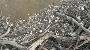Microplastic pollution littering the shores of Lake Erie on Wendy Island on July 20, 2013.