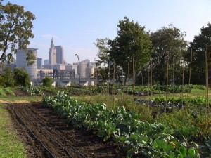 Downtown Cleveland, as seen from the Ohio City Farm (courtesy of the Sustainable City Network).