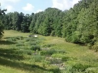 9 mile wetland restored